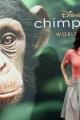 chimpanzee-premiere-019